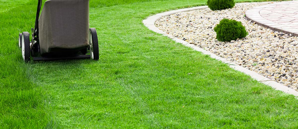 Lawn Care Top Tips